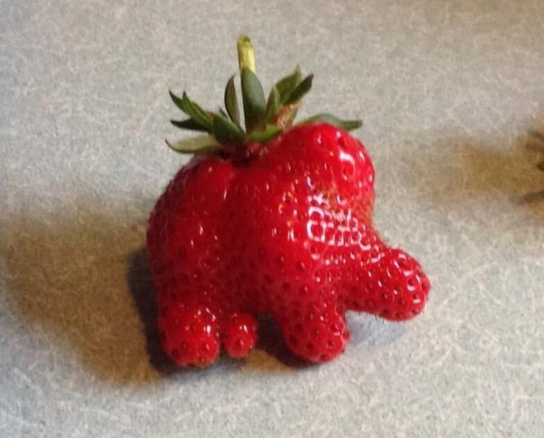Real strawberry shaped like an elephant